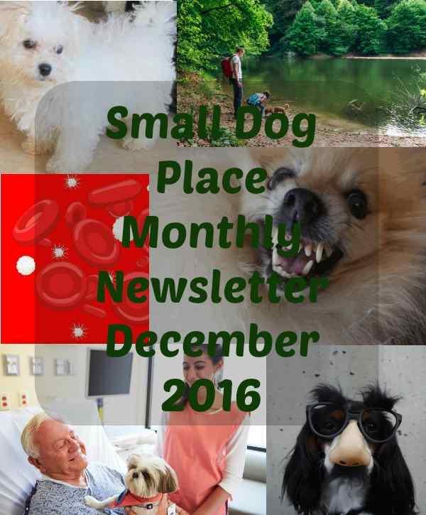 Small Dog Newsletter December 2016