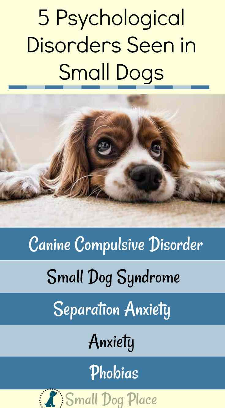 5 Mental Disorders in small Dogs Pin
