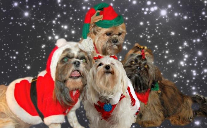 dog names based on the christmas holiday - Christmas Pet Names