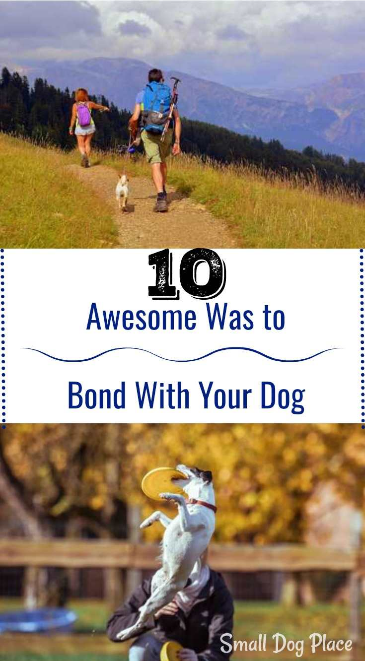 10 Awesome Ways to Build a Bond With Your Dog.  Bonding with your dog at Small Dog Place