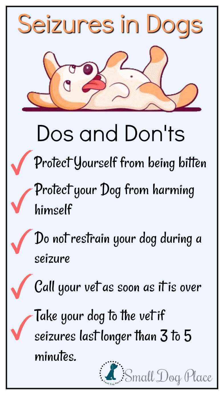 Dos and Don'ts for dealing with seizures in dogs.