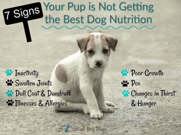 7 Signs Your Pup is not Getting the Best Dog Nutrition