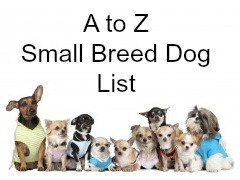An A to Z List of Small Dog Breeds