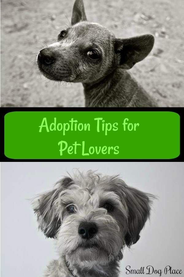 Adoption Tips for Pet Lovers Pin