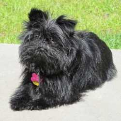 All Small Dog Breed List A Z 90 Tiny