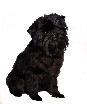 small black dog breeds