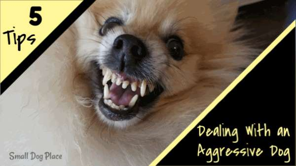 Dealing with an Aggressive Dog