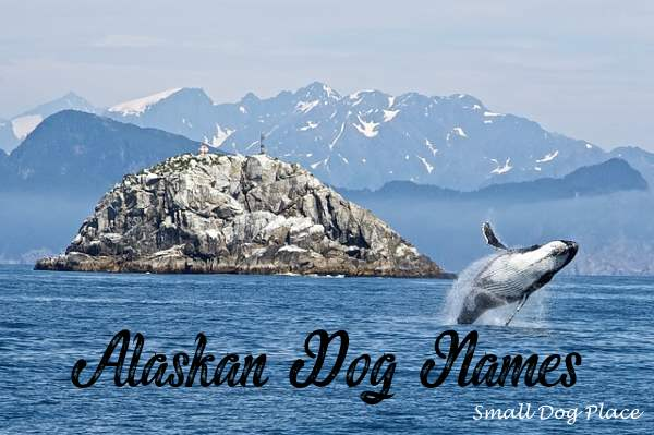 alaskan dog names popular and exotic