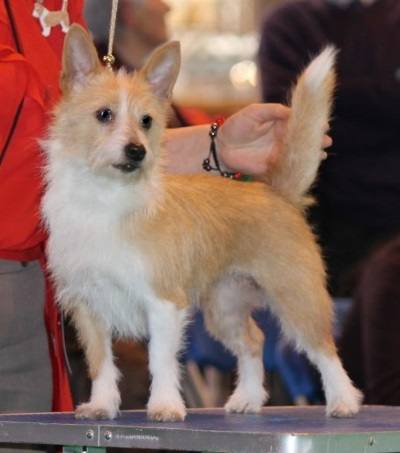 Best of Breed, Crufts 2014 Courtesy of Diana Curtis (links below)