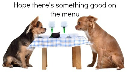 Two dogs, sitting at the table are considering which dog food is best.