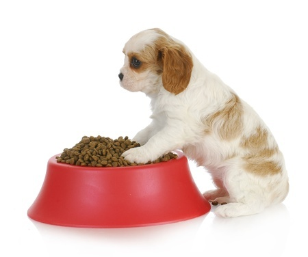 It is important to find a good dog food for your dog.