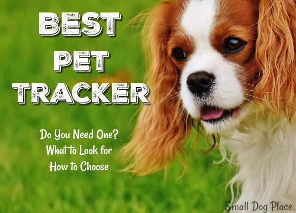 Best Pet Tracker:  Guide to Making an Informed Decision