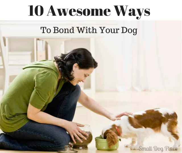 10 Awesome Ways To Bond With Your Dog