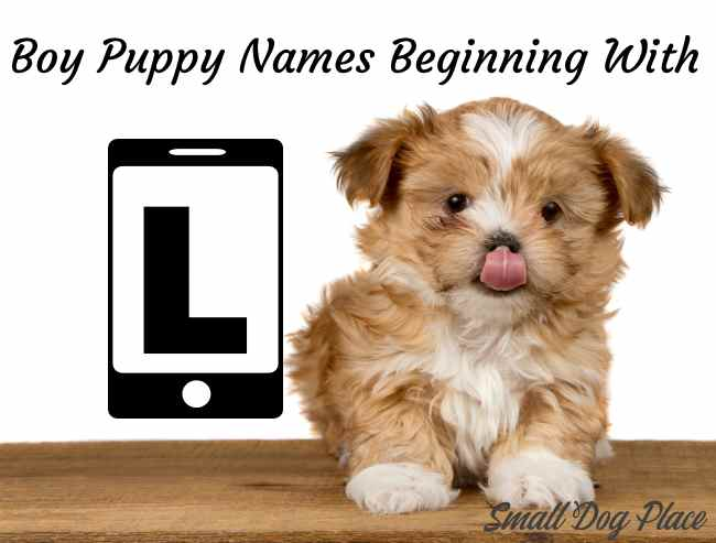 Boy Puppy Names Beginning with L