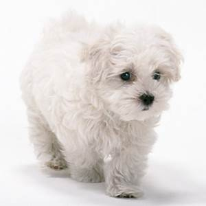 Boy Puppy Names E-F