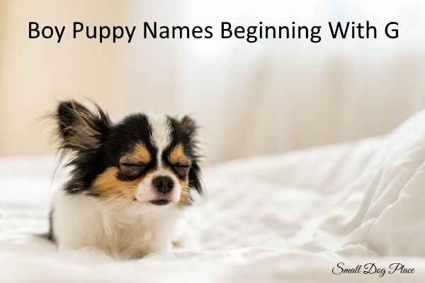 Boy Dog Names Beginning with G