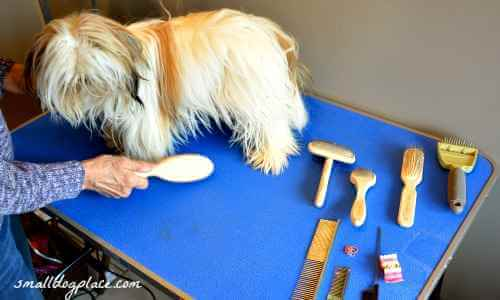 Preparing Your Dog to be Brushed