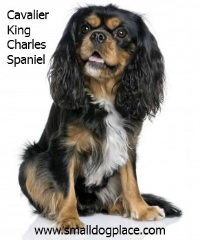 Cavalier King Charles Spaniel:  Good with Children