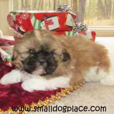 Link to Puppies as Gifts