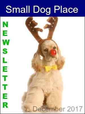Small Dog Place December 2016 Newsletter
