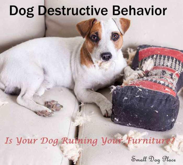 Dog Destructive Behavior
