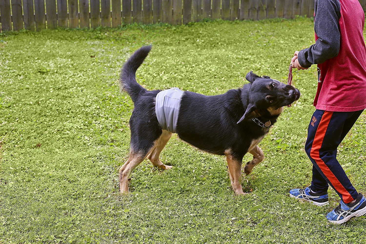 Male Dog Belly Band