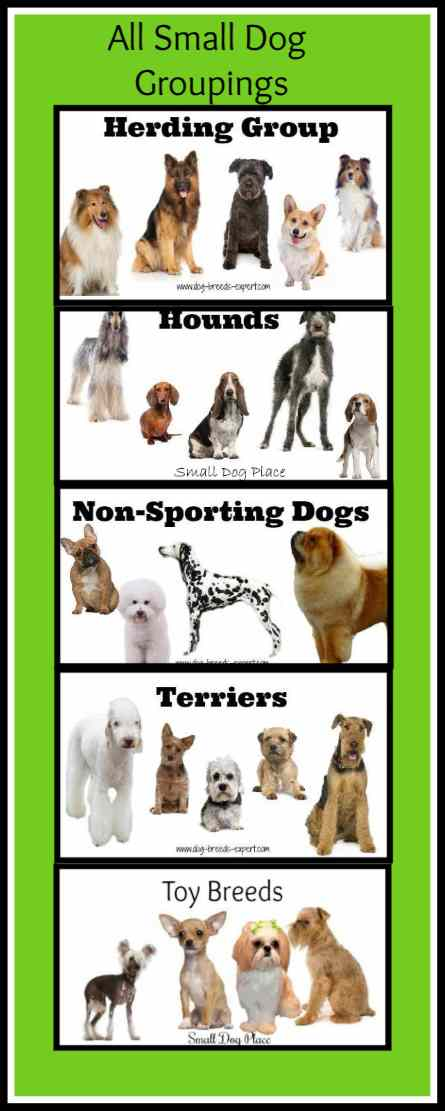 Breeds of Small Dogs, Grouping Categories