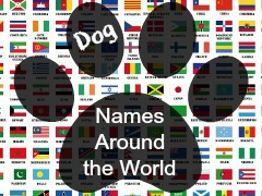 List of Great Dog Names Based on The Breed's Country of Origin