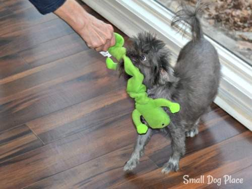 Indoor Dog Games:  Tug of War