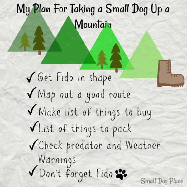Plan, plan and plan some more when taking a small dog up a mountain