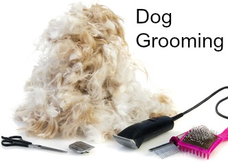 Grooming your small dog