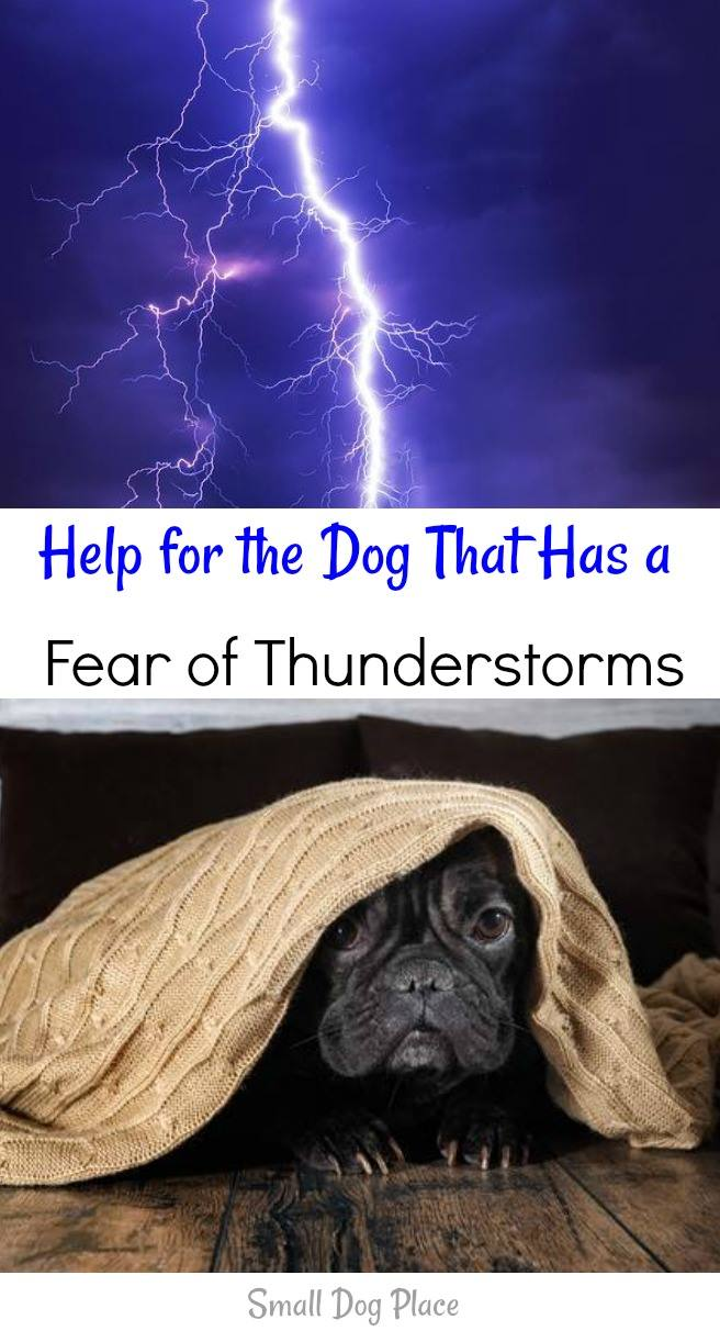 Fear of Thunderstorms:  Help Your Dog Deal with his Fears