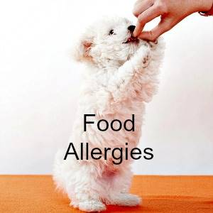Food allergies in Puppies Link to page