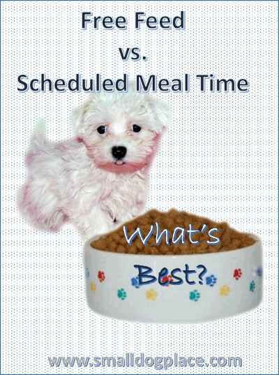 Free Feeding or Scheduled Meal Time:  What is best for your dog?