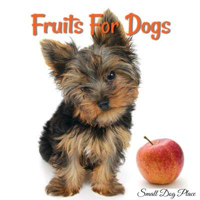 Fruits for Dogs:  Which fruits can my dog eat?