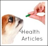 Health concerns of small breeed dogs