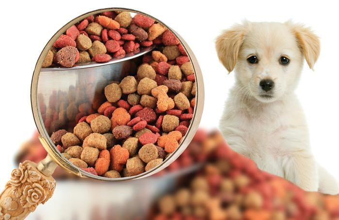 Healthy Dog Food - Seven Secrets to Help You Select the Best