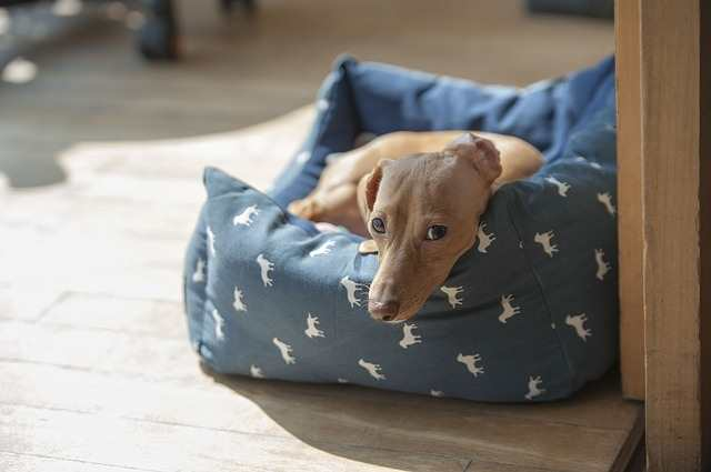 Creating a healthy home environment for you and your dog:  Bedtime