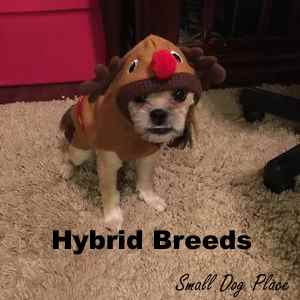All About Small Dog Hybrid Breeds.