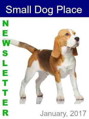 January 2017 Small Dog Newsletter