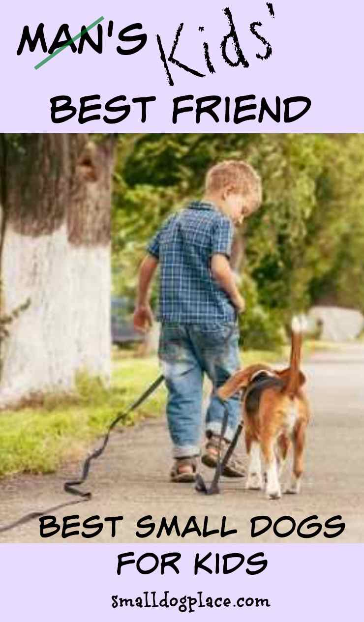 11 Best Small Dogs Good With Children