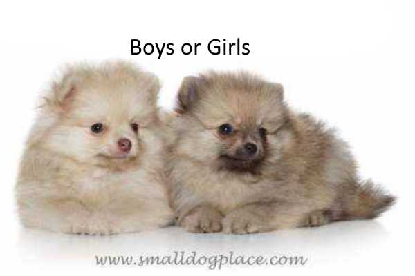 Choose the Best Gender for your next dog