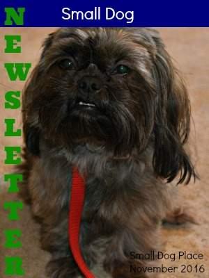Small Dog Place Newsletter November 2016