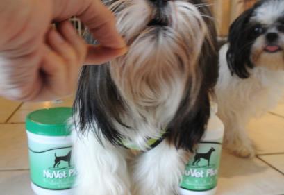 Shih Tzu dog is eating a NuVet Plus wafer.