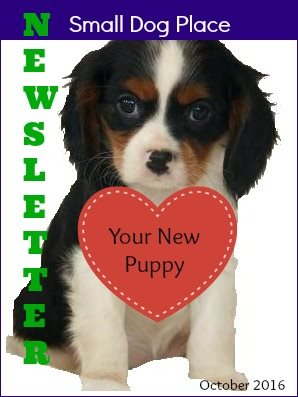 October Newsletter Link Small Dog Place