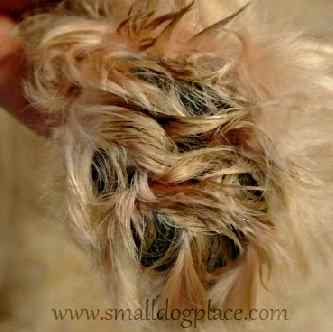 Matted Dog Ten Tips For Removing Mats From Your Long