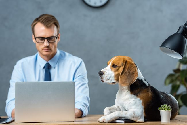 Pets at Work can help reduce stress and lower levels of anxiety and depression.