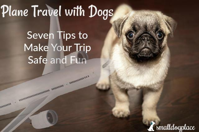 Plane Travel with Dogs: Tips to make your trip fun and safe.