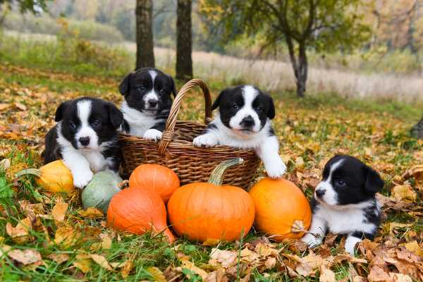 Fruits and Vegetables for Dogs: Pumpkin