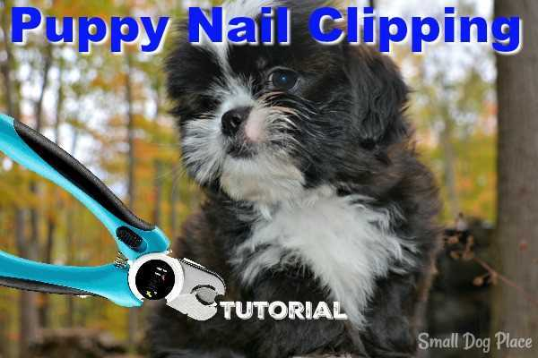 Cutting puppy nails is not as difficult as you might think, but it gets a little tricky if your puppy, squirms, or just plain hates the idea.